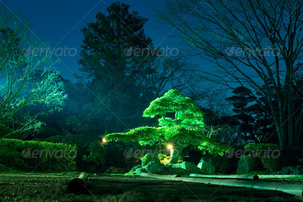 night garden - Stock Photo - Images
