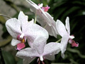 White Orchid Flowers - PhotoDune Item for Sale