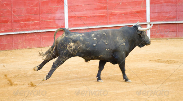 Bullfighting of bulls, typical Spanish tradition where a torero - Stock Photo - Images