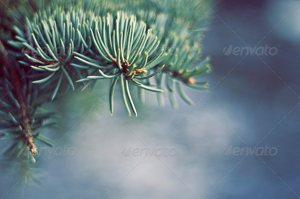 Pine Tree Near Water - Stock Photo - Images