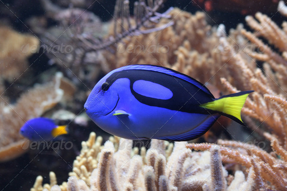 aquarium background - Stock Photo - Images