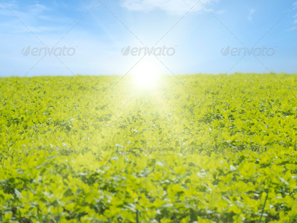 Sunrise over Leafs - Stock Photo - Images