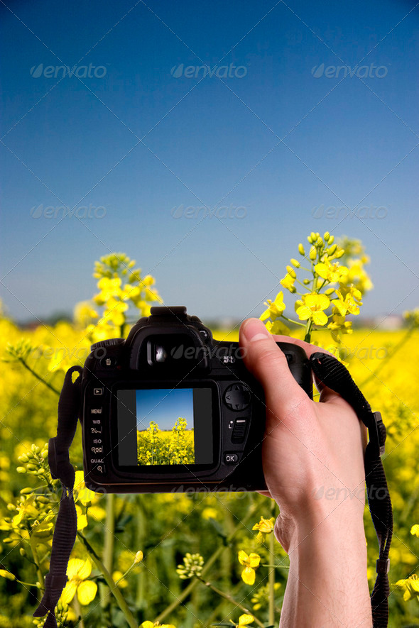 Photo nature - Stock Photo - Images