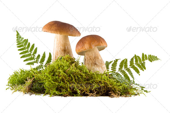Two fresh mushrooms - Stock Photo - Images