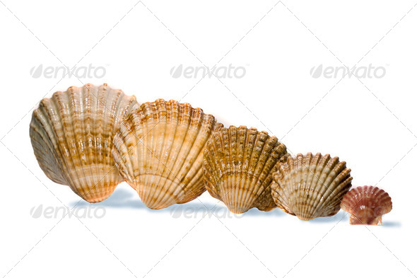 bunch of seac shells - Stock Photo - Images