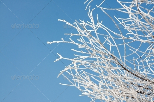Winter branches - Stock Photo - Images