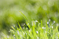 Morning Dew with Bokeh 4 - PhotoDune Item for Sale