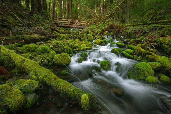 lush green creek - Stock Photo - Images