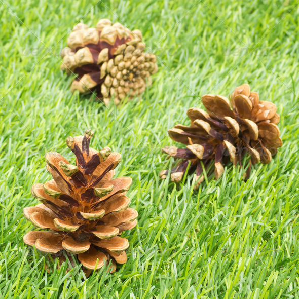 Pine Cones in Grass - Stock Photo - Images
