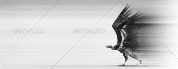 Conceptual - Speedy delivery / transport - Stock Photo - Images
