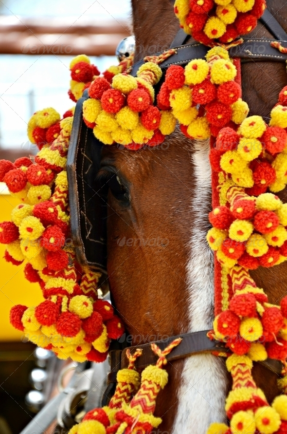Horse Fair in Jerez - Stock Photo - Images