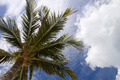Underside of Palm Tree - PhotoDune Item for Sale