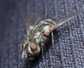Fly Macro - PhotoDune Item for Sale