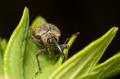 Beetle Macro - PhotoDune Item for Sale