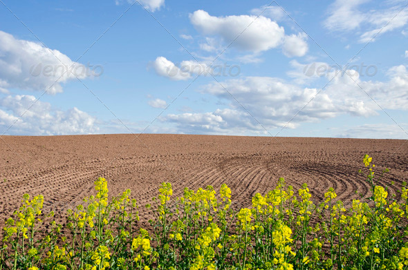 spring rapes blossoms and new tillage - Stock Photo - Images