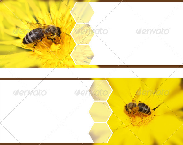 Honeybee banners - Stock Photo - Images