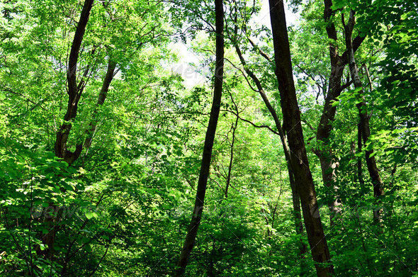 Beautiful green forest background - Stock Photo - Images