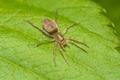 Spider On a Leaf Macro - PhotoDune Item for Sale