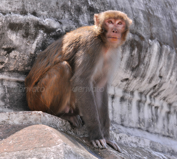 monkey - Stock Photo - Images