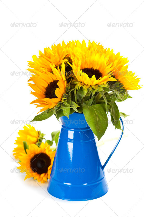 Sunflowers in a blue vase - Stock Photo - Images