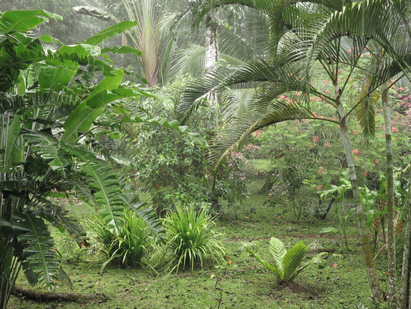 Tropical rainforest - Stock Photo - Images