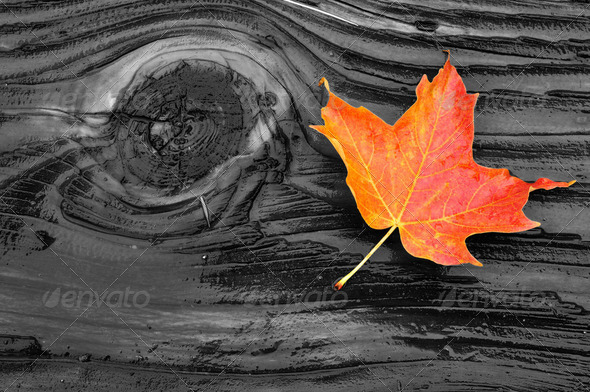 Colorful Maple Leaf on Log - Stock Photo - Images