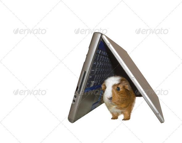 Another use for a broken laptop - Stock Photo - Images