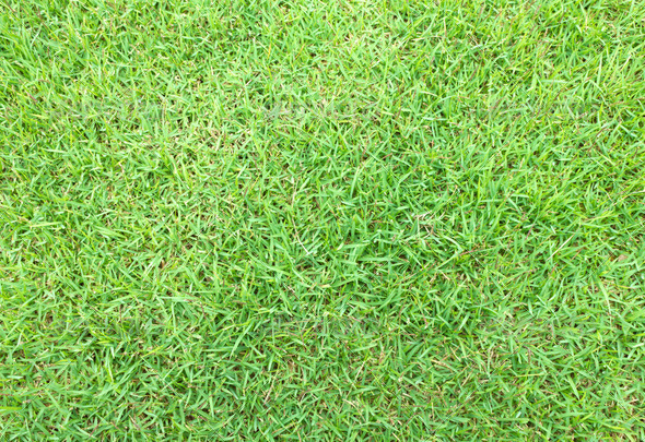 green grass for background - Stock Photo - Images