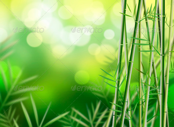 Bamboo background  - Stock Photo - Images