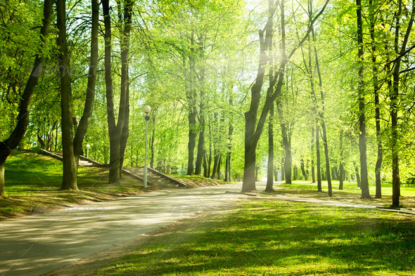 Green park in sunny morning - Stock Photo - Images