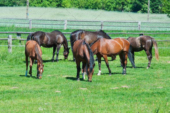 beauty horses on the green grass pasture - Stock Photo - Images