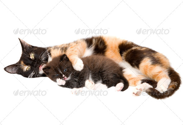 Cat with a kitten - Stock Photo - Images