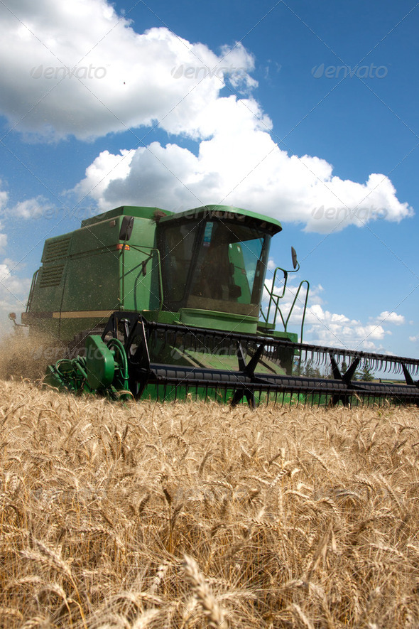 Combine harvester working on a wheat field - Stock Photo - Images