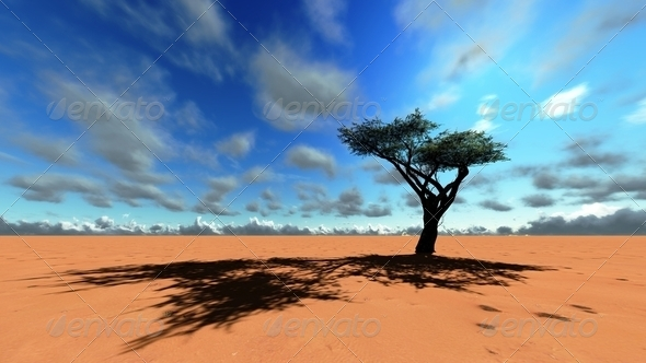 African savannah - Stock Photo - Images