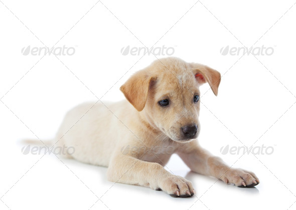 puppy dog - Stock Photo - Images