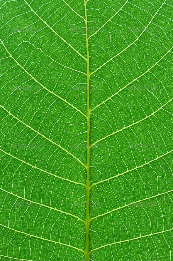 green leaf - Stock Photo - Images