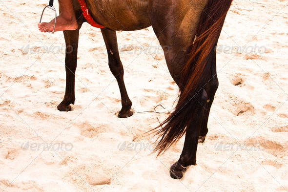 Brown horse. - Stock Photo - Images