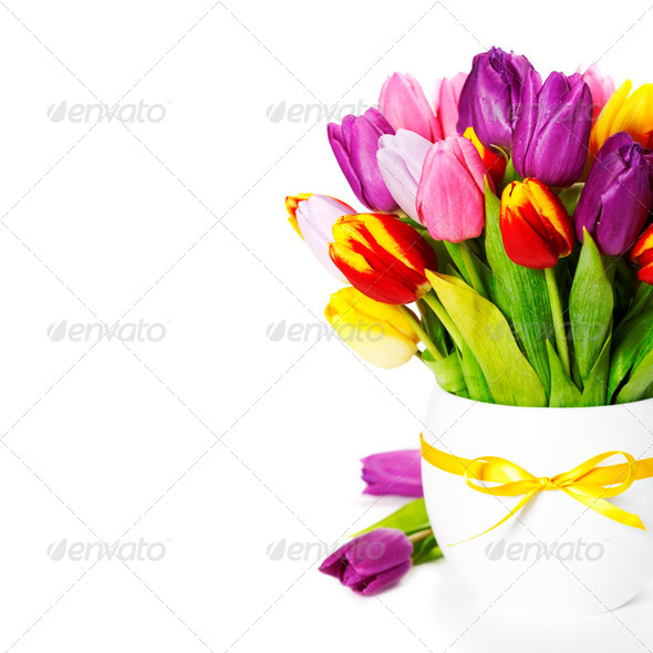 fresh tulips - Stock Photo - Images