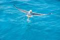 bird seagull on sea water in ocean - PhotoDune Item for Sale