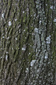 Texture of Tree Bark with Moss - PhotoDune Item for Sale