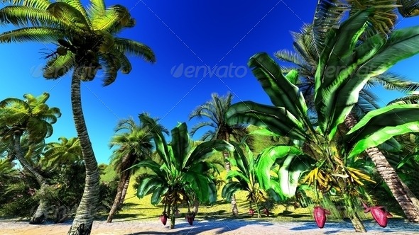 Tropical paradise - Stock Photo - Images