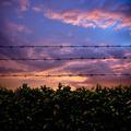Barbed wire and sunset - PhotoDune Item for Sale
