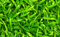 Green Grass Pad - PhotoDune Item for Sale