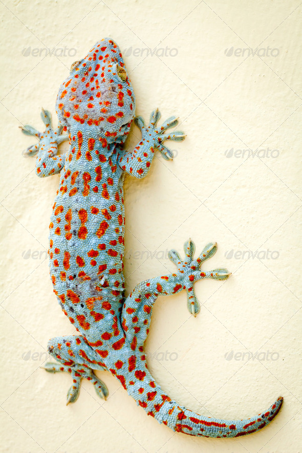 Gecko Portrait - Stock Photo - Images