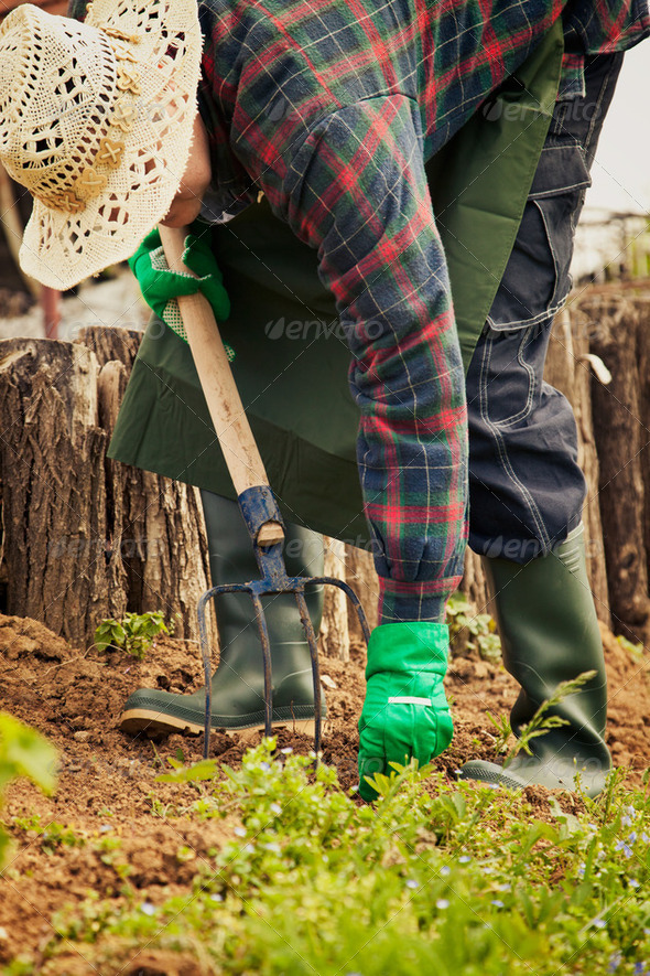 Gardener - Stock Photo - Images