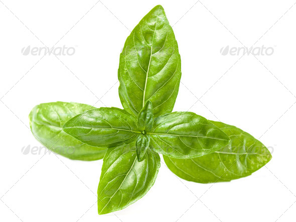 Basil - Stock Photo - Images