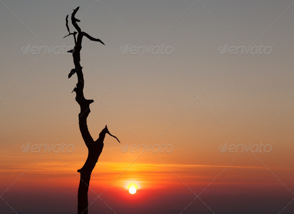 Gnarled tree on Skyline drive in Virginia - Stock Photo - Images