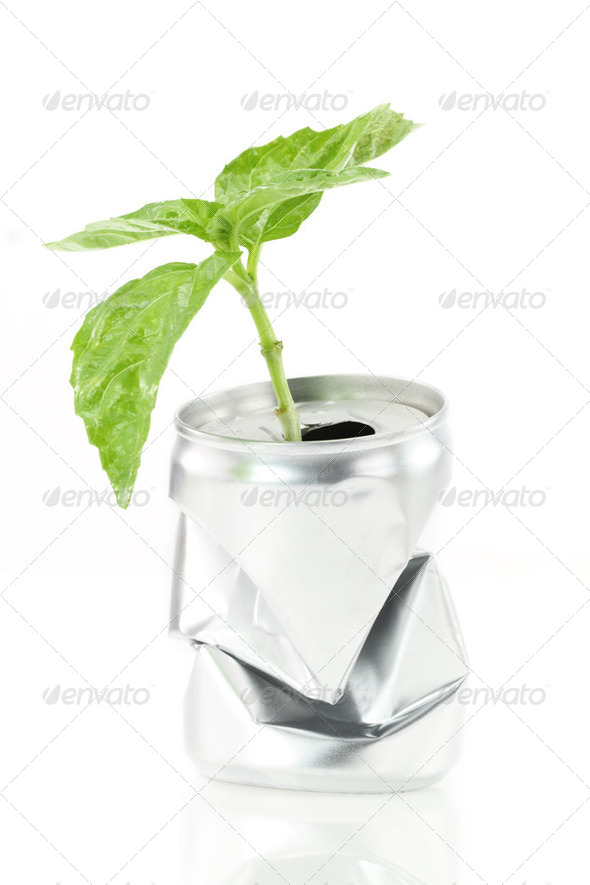 New life. Aluminum can with growing green plant - Stock Photo - Images