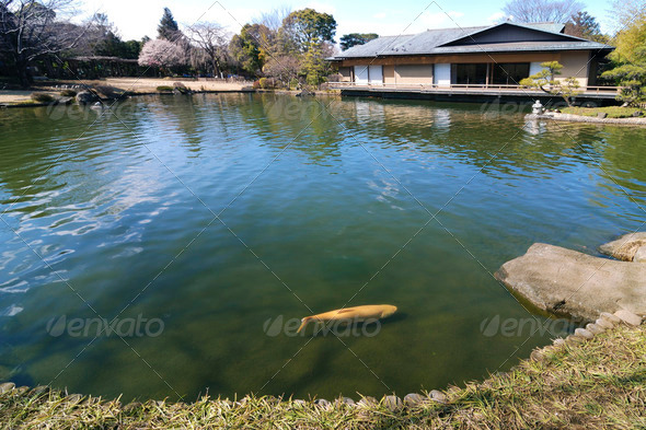 zen pond - Stock Photo - Images