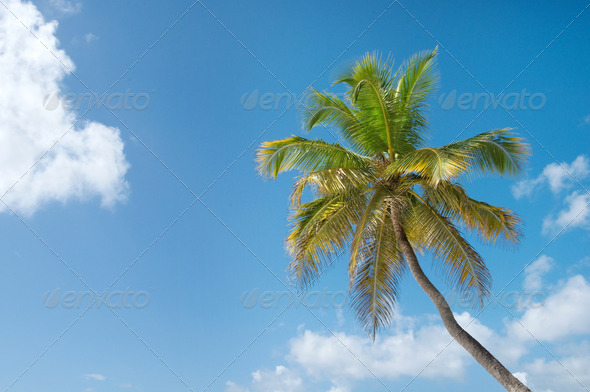 Palm Trees In Front Of Azure Skyline. - Stock Photo - Images